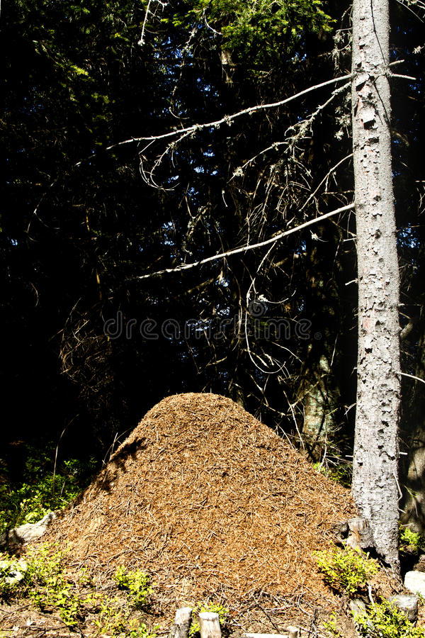 Download The Big Ant Hill In Wood Royalty Free Stock Photo - Image: 21106625