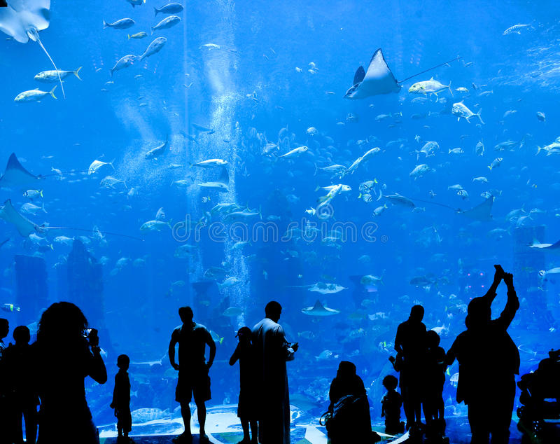 Big aquarium stock image