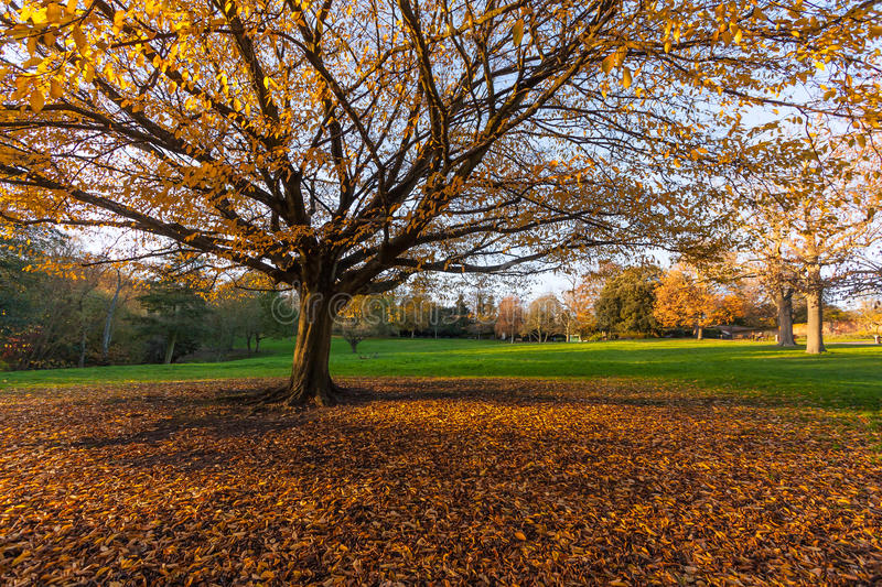 Big Autumn Tree in the Park royalty free stock photos