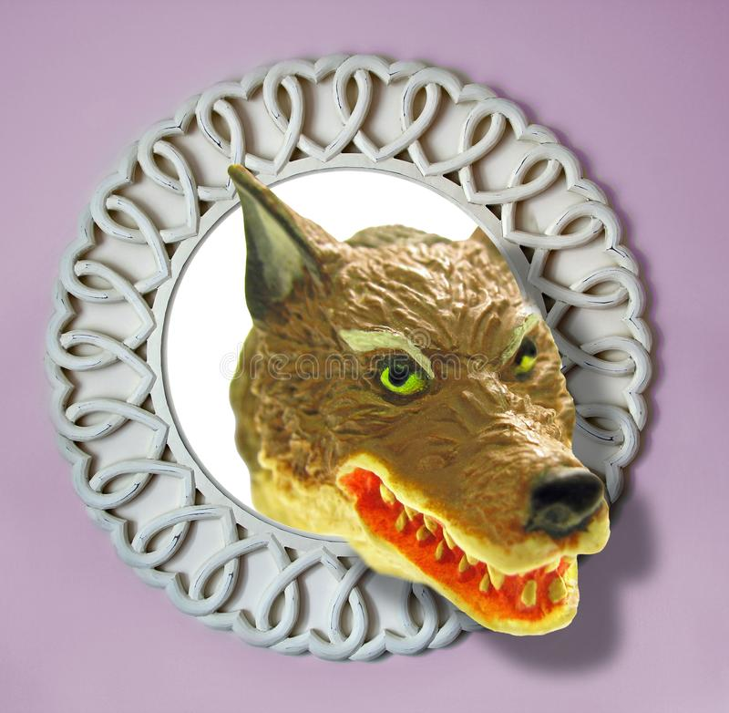 Big bad ugly wolf face in mirror teeth growling. Concept photo of big bad ugly wolf face emerging from wall mirror ideal for fantasy concept etc stock photography