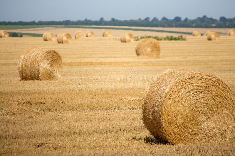 Big bales of hay in the field. Rolls of golden hay in summer meadow. Agriculture concept. Yellow haystacks in farmland. stock images