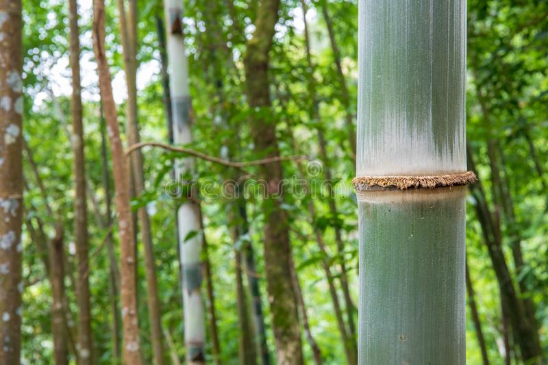 7 149 Big Bamboo Photos Free Royalty Free Stock Photos From Dreamstime