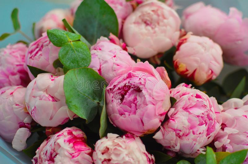 Big beautiful bouquet of pink peonies royalty free stock photography