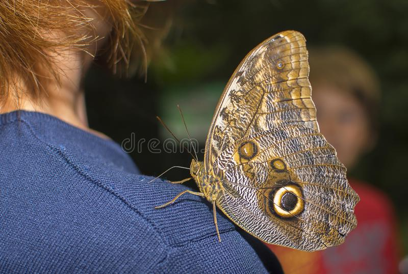 A big beautiful colorful butterfly stock photography