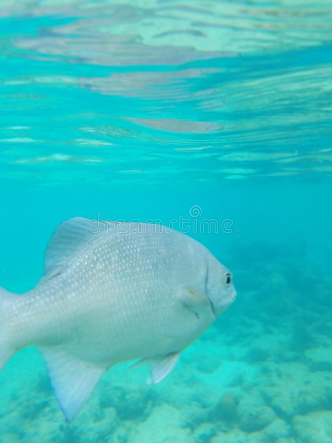 Fish in ocean royalty free stock photography