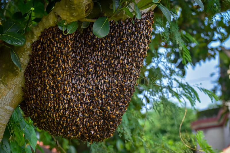 Image result for wilderness beehive