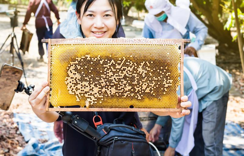 Big bee hive presented by smiling Asian women with farmers working in the farm garden stock image
