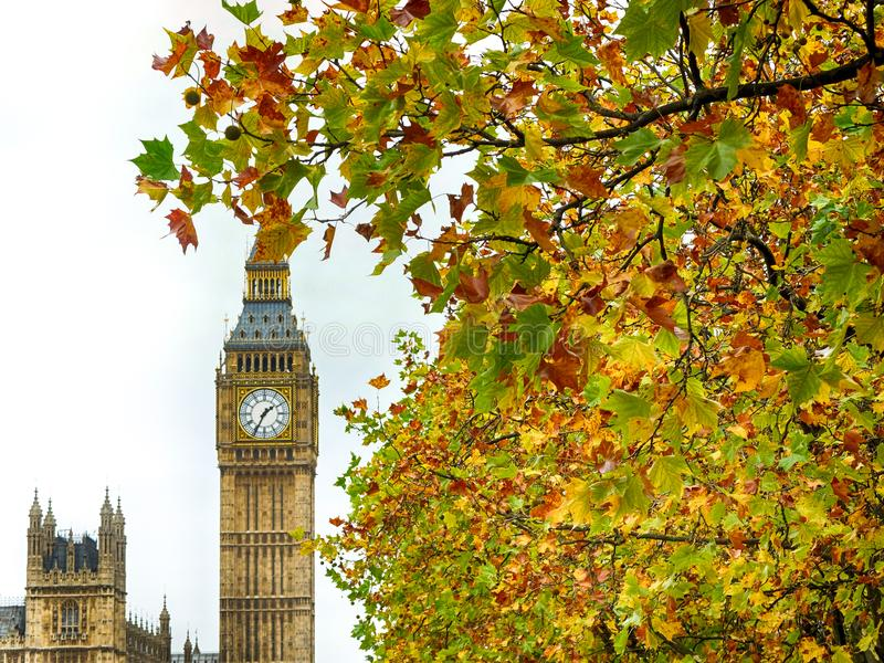 Big Ben-het omringen door de Herfstbladeren stock afbeelding
