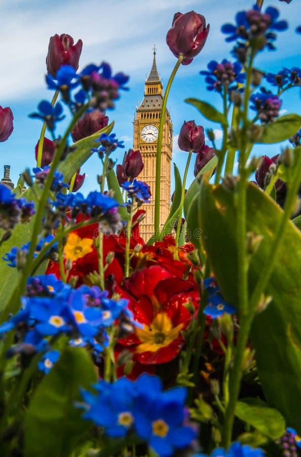 Big Ben kwiat Londyn obrazy stock