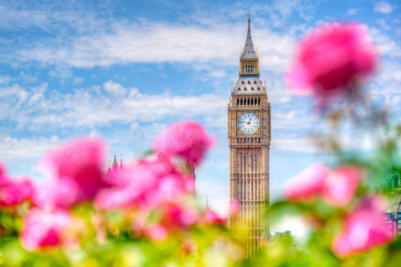 Big Ben, London UK Sikten från en offentlig trädgård med härliga rosor blommar arkivbild