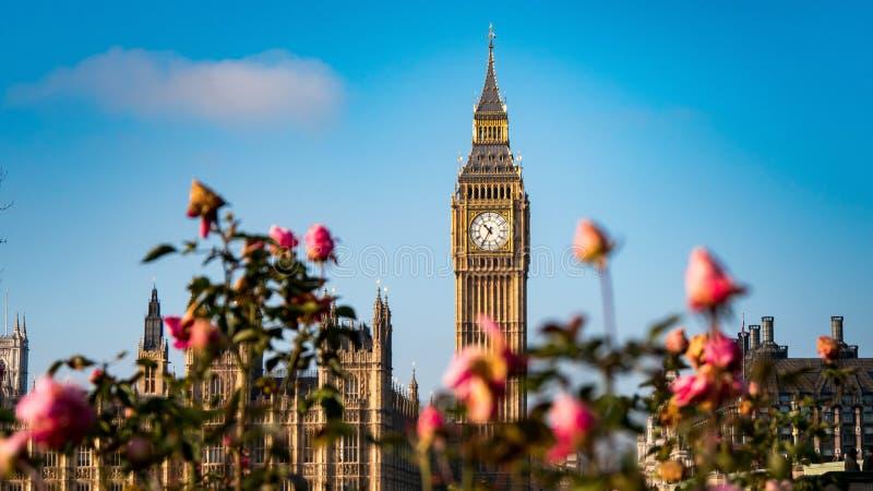 Big Ben med rosor royaltyfria bilder