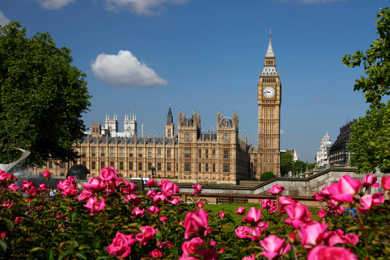 Big Ben with roses, London, UK. Famous Big Ben with full garden of roses royalty free stock photo