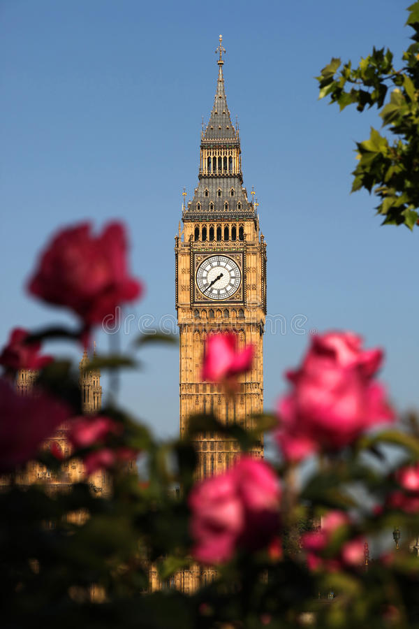 Big Ben with roses, London, UK. Big Ben with full garden of roses in London, Uk stock photos