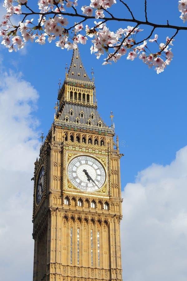 Big Ben spring. Big Ben clock tower - landmark of London, UK. Spring time cherry blossoms stock images