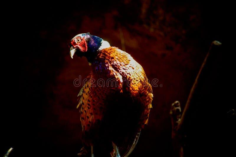 Big bird,. Fauna nature outdoors stock images