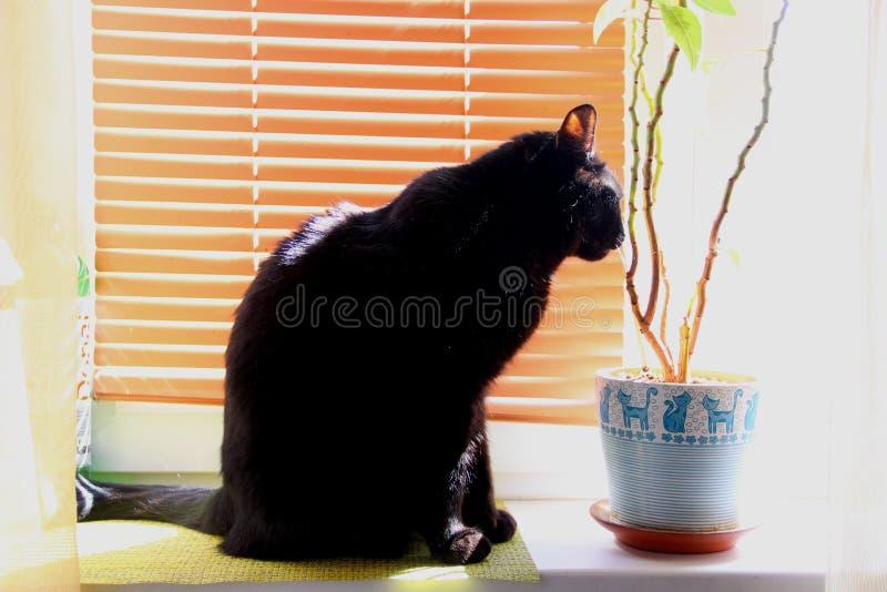 Big black cat sitting on windowsill in Sunny noon. A big black cat sitting on windowsill in Sunny noon stock images