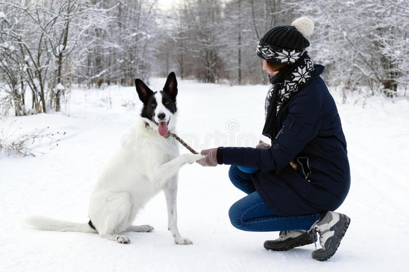 Big black-white dog is giving a paw its owner on a background of winter snowy forest stock photos