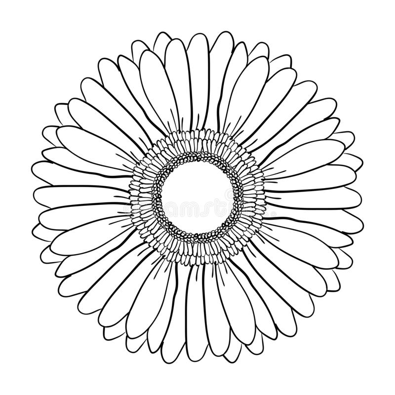 Big blooming Gerbera flower. Hand drawn illustration vector. Vector realistic black and white hand-drawn image sketch of Gerber royalty free illustration