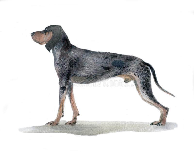 The big blue Gascon beagle painted in watercolor in profile royalty free stock photo