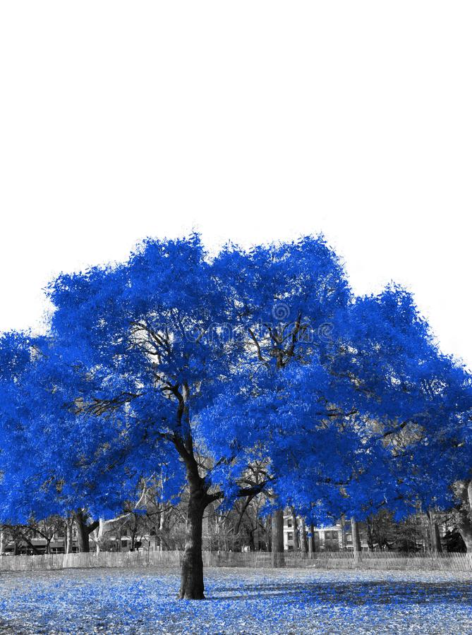 Big blue tree in black and white landscape stock images