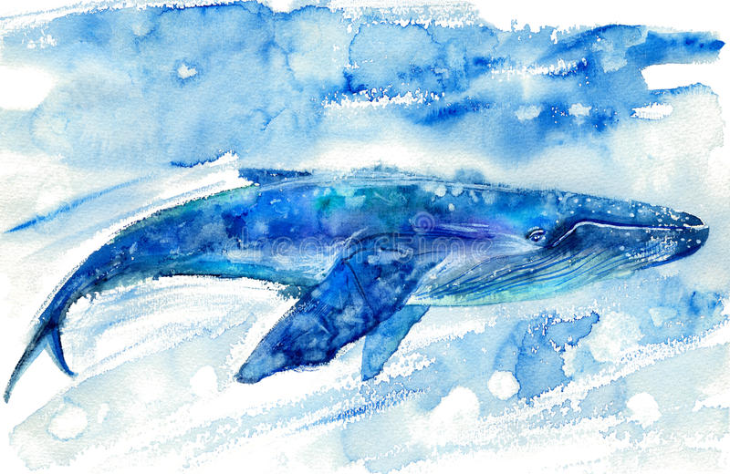 Big Blue Whale and water. royalty free stock images