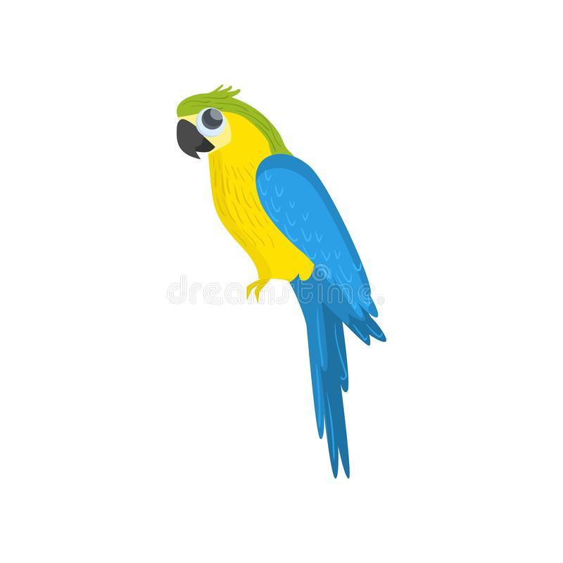 Big blue and yellow sitting parrot isolated on white background. Side view. Cartoon kawaii tropical bird. Big blue and yellow sitting parrot isolated on white royalty free illustration