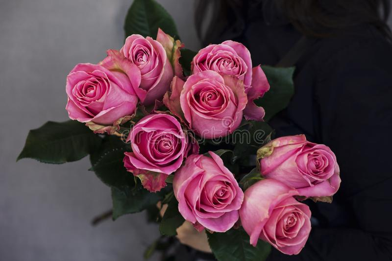 The big bouquet of beautiful pink roses in woman hands on gray b. The big bouquet of beautiful pink roses in woman hands on the gray background stock images