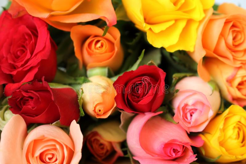 Bouquet of multicolored roses flowers for background royalty free stock images