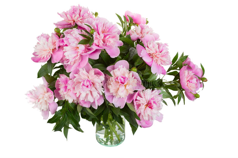 Big bouquet of pink peonies stock photos