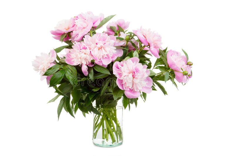 Big bouquet of pink peonies royalty free stock photography