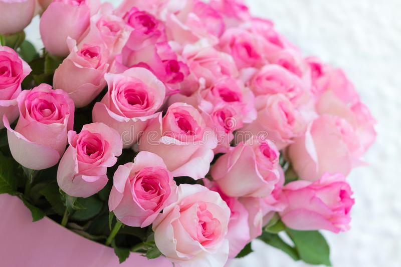 A big bouquet of pink roses. In a pink box on white background royalty free stock photography