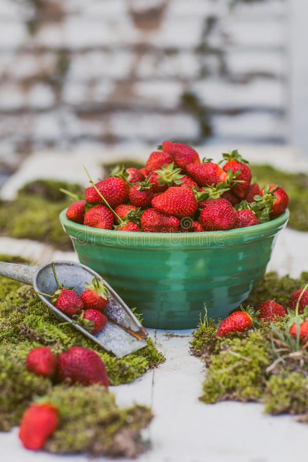 A Big Bowl of Freshly Picked Strawberries royalty free stock photos