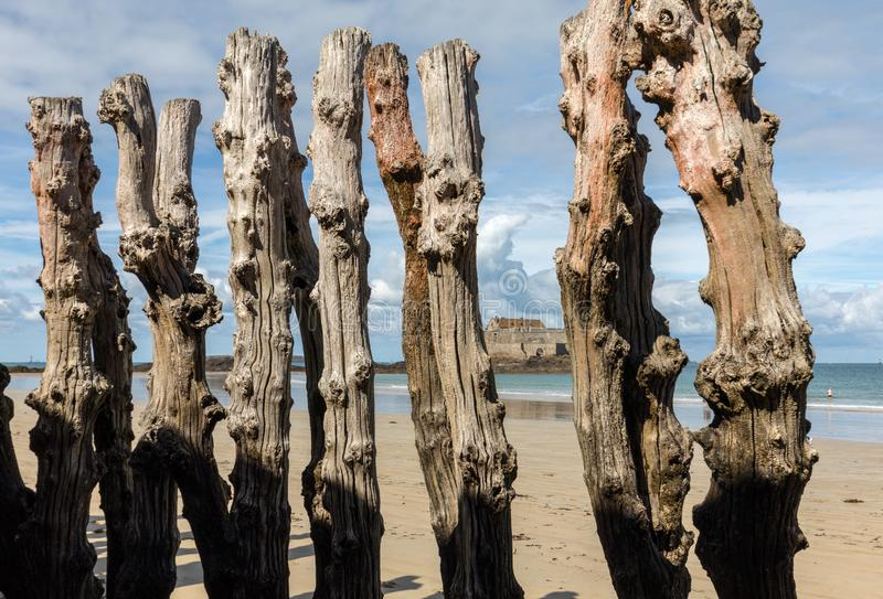 Big breakwater, 3000 trunks to defend the city from the tides, Plage de l`Éventail beach in Saint-Malo, Ille-et-Vilaine,. Brittany royalty free stock photos