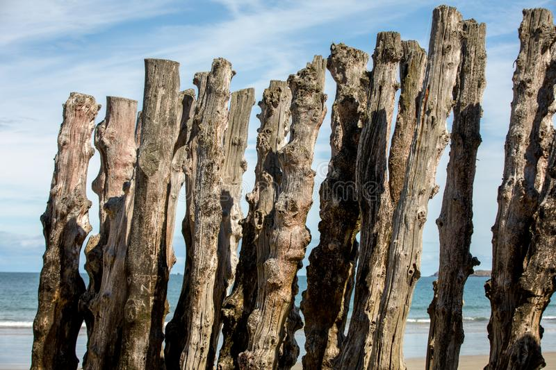 Big breakwater, 3000 trunks to defend the city from the tides, Plage de l`Éventail beach in Saint-Malo, Ille-et-Vilaine,. Brittany stock image