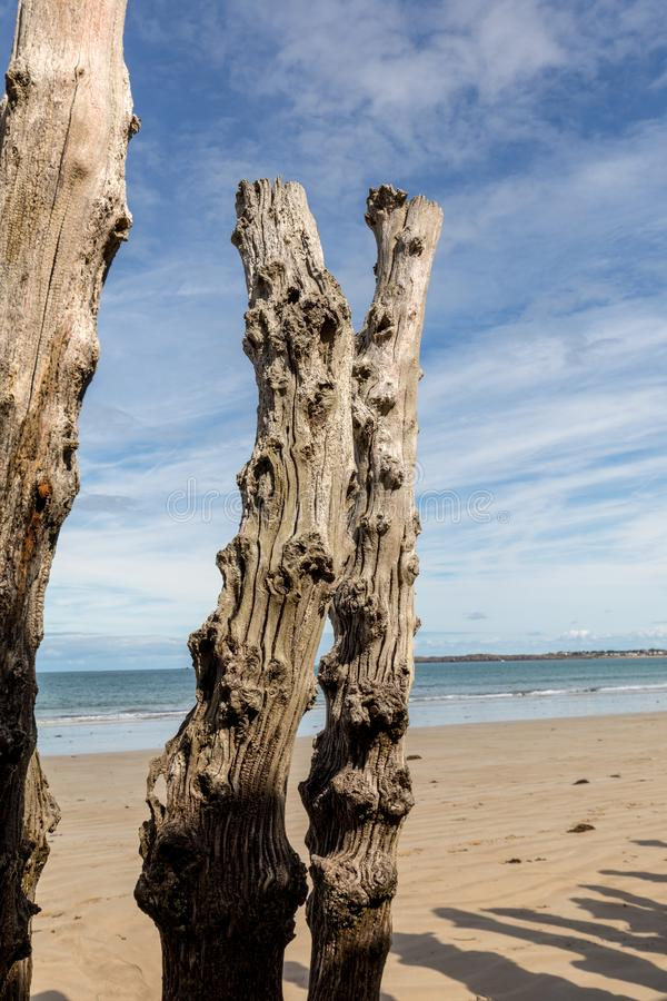 Big breakwater, 3000 trunks to defend the city from the tides, Plage de l`Éventail beach in Saint-Malo, Ille-et-Vilaine,. Brittany stock images
