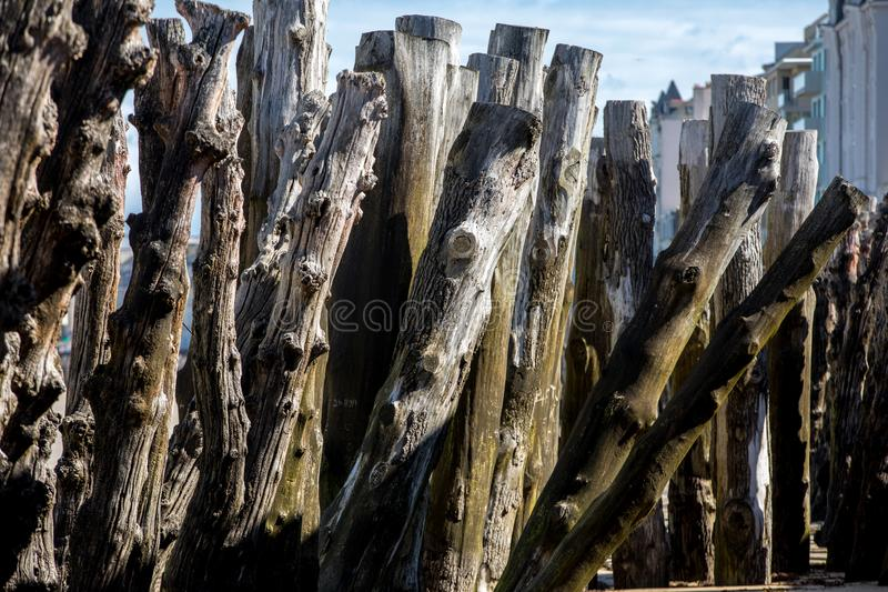 Big breakwater, 3000 trunks to defend the city from the tides, Plage de l`Éventail beach in Saint-Malo, Ille-et-Vilaine,. Brittany royalty free stock image