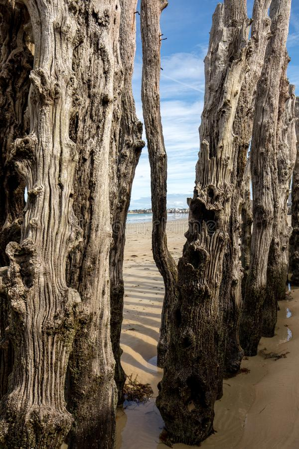 Big breakwater, 3000 trunks to defend the city from the tides, Plage de l`Éventail beach in Saint-Malo, Ille-et-Vilaine,. Brittany royalty free stock images