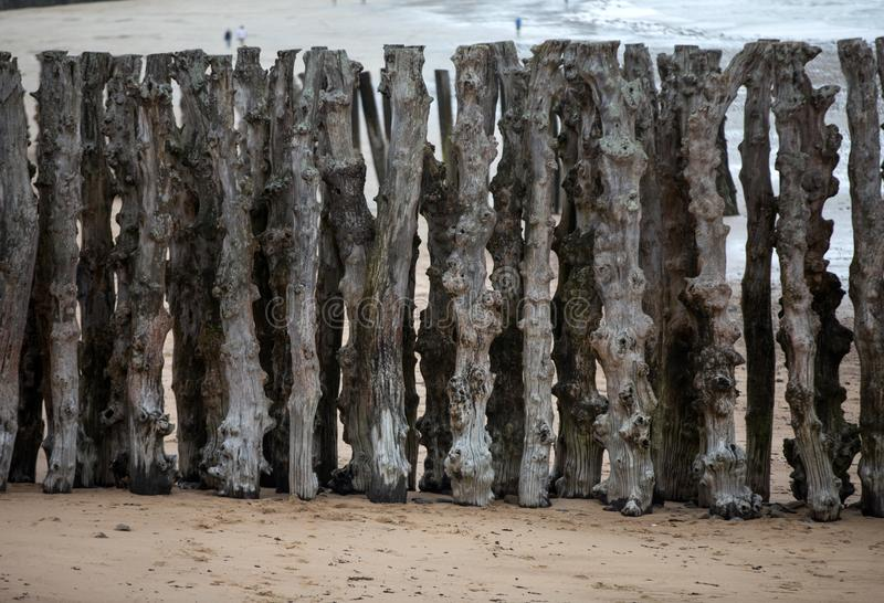Big breakwater, 3000 trunks to defend the city from the tides, Plage de l`Éventail beach in Saint-Malo, Ille-et-Vilaine. Brittany stock photos