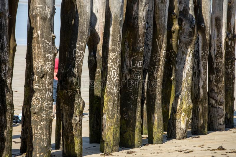 Big breakwater, 3000 trunks to defend the city from the tides, Plage de l`Éventail beach in Saint-Malo, Ille-et-Vilaine,. Brittany stock photo