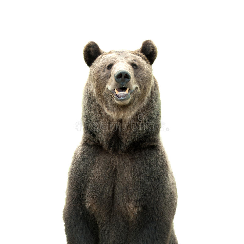 Free Big Brown Bear Stock Photos - 76908433