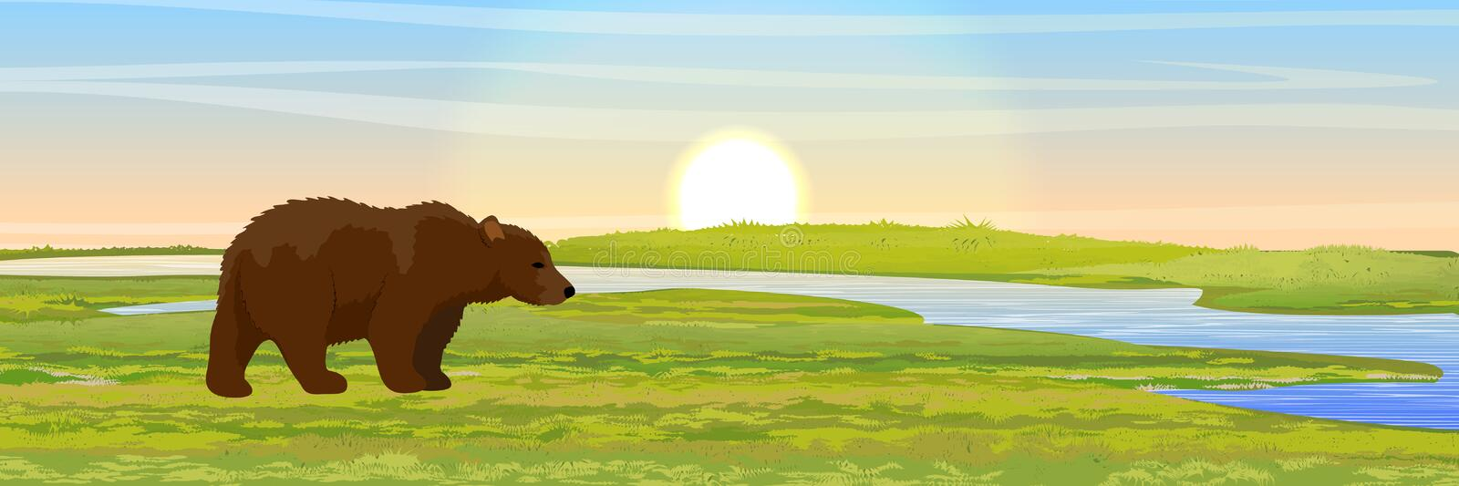 Big Brown Bear walks through the meadow to the river royalty free illustration
