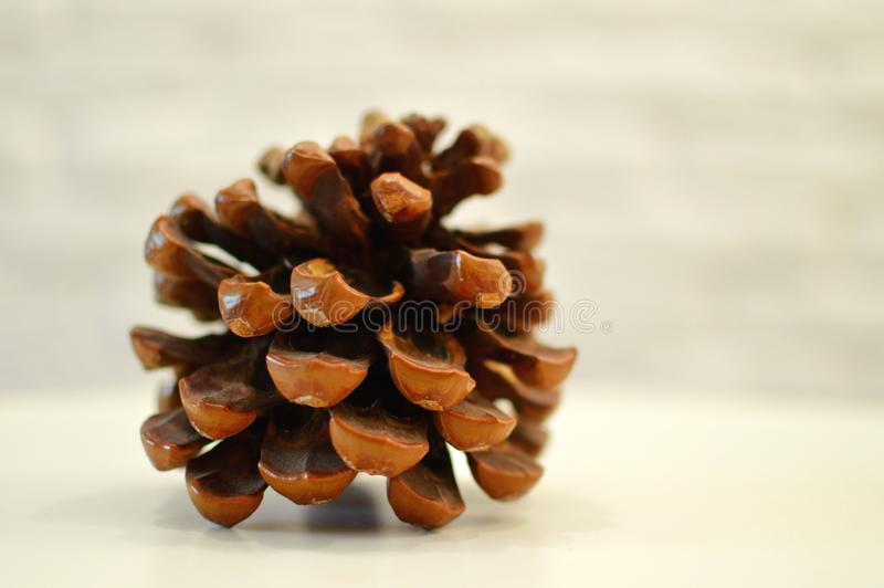 Big brown cone without nuts on a table royalty free stock image