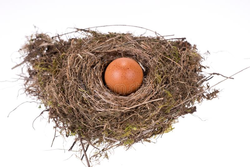 Big brown egg in the small bird nest stock image