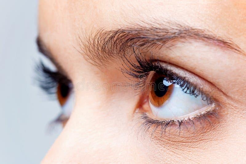 Big brown eyes stock images
