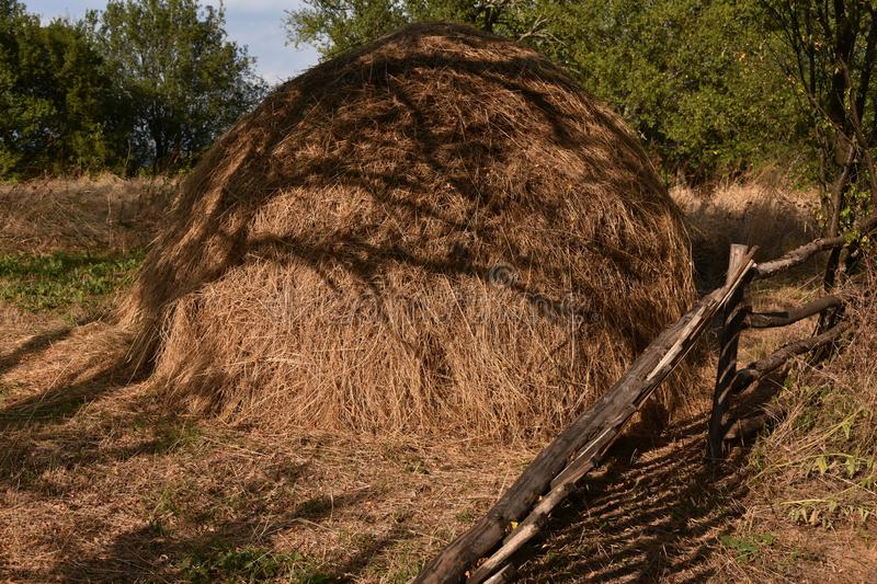 Big brown pile of hay on the floor. Photo of big brown pile of hay on the floor, green trees in background, piles, tree, village stock photos