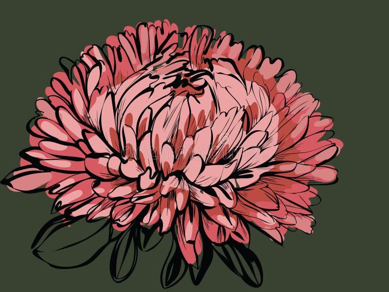 Download Big bud chrysanthemum stock vector. Image of sketch, green - 19985119