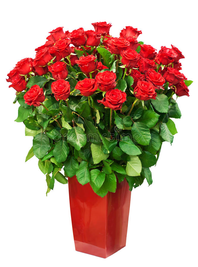 Big bunch of roses. In vase isolated on white royalty free stock photos