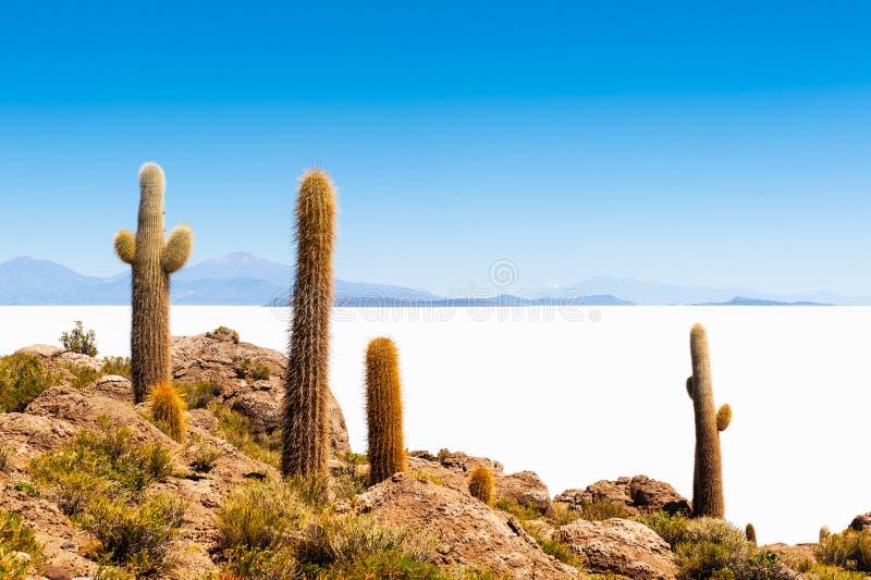 Big cactus on Incahuasi island, Salar de Uyuni salt flat, Bolivia. Big cactus on Incahuasi island, Salar de Uyuni salt flat, Altiplano, Bolivia. Travel and royalty free stock photography