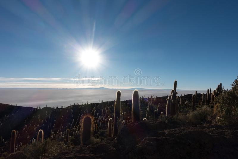 Big cactus in Incahuasi island in the time of sunrise. Big cactus in Incahuasi island, Salar de Uyuni , Bolivia royalty free stock images
