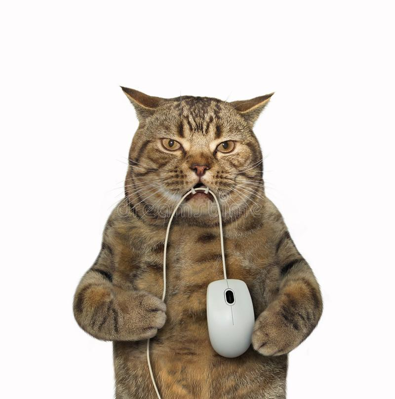 Cat with computer mouse. The big cat is holding a computer mouse in its teeth. White background stock photos